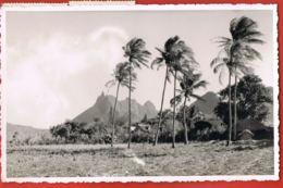 MAURITIUS- ILE MAURICE - Beautés De L'Ile Maurice-Un Aspect Du Pieter-Both-voyagé 1951 Avec 2 Timbres-scans Recto Verso - Autres