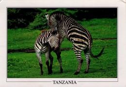 TANZANIA. FAUNA. ZEBRAS. LAKE MANYARA. GA139A. (487) - Tanzania