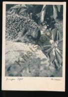 Junger Igel - Niessen [ AA28 1.187 - Deutschland