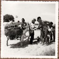 Photo Carrée Originale 30 Millions D'Amis - Playboy  Avec Un Âne Chargé à Tarragone En 1961 - Vacances En Espagne - Anonieme Personen