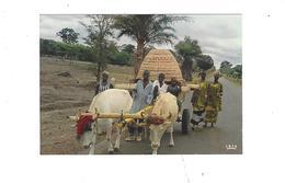 AFRIQUE EN COULEURS  RENCONTRE SUR LA ROUTE  CHAR A BOEUFS   **** A SAISIR   ***** - Postales