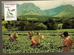 Mozambique & Maxi Card, Agricultural Riches, Tea, Camellia Sinensis (6338) - Plants
