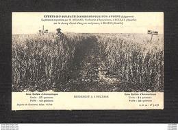 57 - DALEM - Expérience Organisée Par M. MÉNARD, Professeur D'Agriculture, à Boulay Sur Le Champ D'essai à DALEM - Frankreich