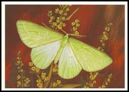 BUTTERFLY - PAPILLON Thetidia Smagardaria F. Artist L. Aristov. Unused Postcard (USSR, 1983) - Vlinders