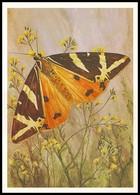 BUTTERFLY - PAPILLON Callimorpha Quadripunctaria Poda-hera L. Artist L. Aristov. Unused Postcard (USSR, 1983) - Vlinders