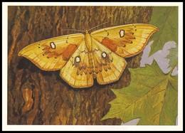 BUTTERFLY - PAPILLON Cosymbia Albiocellaria Hbn. Artist L. Aristov. Unused Postcard (USSR, 1983) - Vlinders