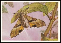 BUTTERFLY - PAPILLON Proserpinus Proserpina Pall. Artist L. Aristov. Unused Postcard (USSR, 1983) - Vlinders