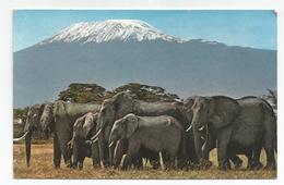 Africa Wild Life - Herd Of Elephant, Agaist Mt. Kilimanjaro - Elephants
