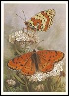 BUTTERFLY - PAPILLON Melitaea Didyma Esp. Artist L. Aristov. Unused Postcard (USSR, 1983) - Vlinders