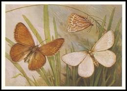 BUTTERFLY - PAPILLON Triphysa Phryne Pall. Artist L. Aristov. Unused Postcard (USSR, 1983) - Vlinders
