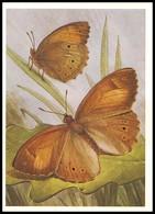 BUTTERFLY - PAPILLON Kirinia Climene Esp. Artist L. Aristov. Unused Postcard (USSR, 1983) - Vlinders
