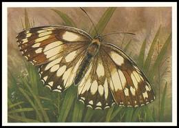 BUTTERFLY - PAPILLON Melanargia Galathea L. Artist L. Aristov. Unused Postcard (USSR, 1983) - Vlinders