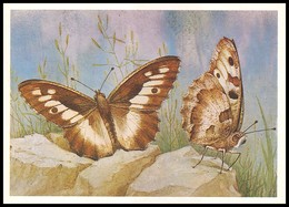 BUTTERFLY - PAPILLON Satyrus Briseis L. Artist L. Aristov. Unused Postcard (USSR, 1983) - Vlinders