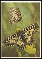 BUTTERFLY - PAPILLON Zerynthia Polyxena Schiff. Artist L. Aristov. Unused Postcard (USSR, 1983) - Vlinders