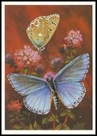 BUTTERFLY - PAPILLON Lysandra Bellargus Rott. Artist L. Aristov. Unused Postcard (USSR, 1983) - Vlinders