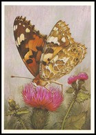 BUTTERFLY - PAPILLON Vanessa Cardui L. Artist L. Aristov. Unused Postcard (USSR, 1983) - Vlinders