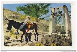 Ghardaia Fellah Puisant De L' Eau à La Noria ( Peu Courante ) - Ghardaïa