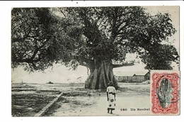 CPA-Cartes Postale-Kenya-Baobabs -1913  VM9506 - Kenya
