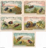 "Lot / Série  De 5 "" Chromo Image ""  Les Insectes Utiles  à Protéger  ( Recto Verso ) - Trade Cards"