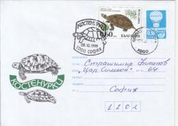 ANIMALS, REPTILES, TURTLE, COVER STATIONERY, ENTIER POSTAL, 1999, BULGARIA - Tartarughe