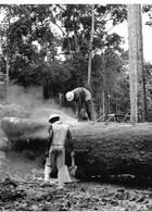 Photo Gabon Exploitation Forestière  Fin1980 - Africa