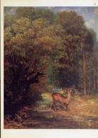 Gustave Courbet - 1819-1877 - The Hunted Stag - Musee De Lovre - Formato Grande Non Viaggiata – E 14 - Musei