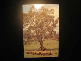 SHEEP Goat Goats Wool Farm Farms Tree Trees Postal Stationery Card Australia - Ferme