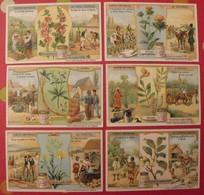 6 Chromo Liebig : Plantes Tinctoriales. 1909. S 969. Chromos. - Liebig