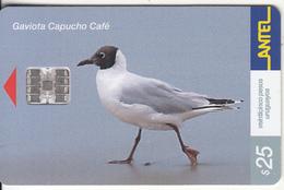 URUGUAY - Bird, Gaviota Capucho Cafe(193a), 09/01, Used - Uruguay