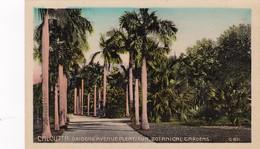 CALCUTTA, India, 1910-20s; Oridone Avenue Plentisun, Botanical Gardens - India