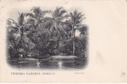BOMBAY , India , PU-1909 ; Victoria Gardens - India