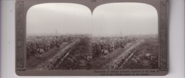 THOUSANDS OF GERMAN PRISONERS THE SAMBRE GUERRE WAR  WWI  Stéréoscopique Stéréoscope Carte Photo Stéréo - Guerre, Militaire