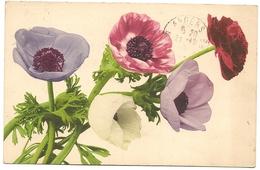 Fantaisie FLEURS  - - Fleurs