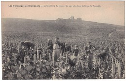 Les Vendanges En Champagne - La Cueillette Du Raisin - Un Des Plus Beau Coteaux Deu Vignoble - Y. Thuillier éditeur - Francia