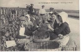 Les Vendanges En Champagne - Épluchage Du Raisin - Y. Thuillier éditeur - Non Classés