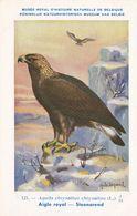 Golden Eagle Aquila Chrysaetos WW2 Antique Rare Bird Postcard - Vogels