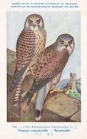 Common Kestrel Falco Tinnunculus WW2 Antique Rare Bird Postcard - Vogels