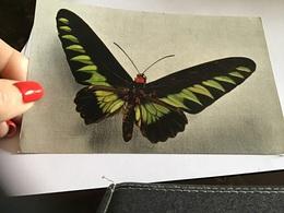 Papillon édité Par Le Comité National De L'enfance Paris - Vlinders