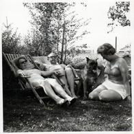 Photo Carrée Originale Sieste & Farniente Sur Transat Pour Chien Boxer Bavant Sur Sa Maîtresse Sexy Vers 1960 - Pin-ups
