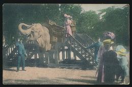 ANTWERPEN  JARDIN ZOOLOGIQUE  PROMENADE DES ELEPHANTS - Antwerpen