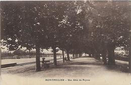 34, Hérault, MONTPELLIER, Une Allée Du Peyrou, Scan Recto Verso - Montpellier