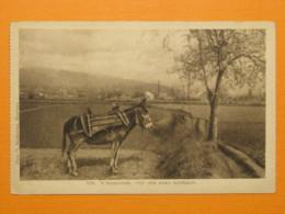 #37962, Macedonia, Donkey, Feldpost 1917 - Mazedonien