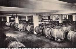 VIN VIGNE - CHAMPAGNE DE CASTELLANE Epernay - Un Des Celliers De Vins En Réserve - CPSM PF Vine Wine Vineyward Harvest - Vigne