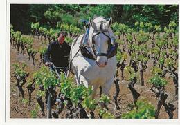 CAMPLONG  - Domaine Combe Grande Viticulture Travail De La Vigne Labour (cheval Et Charrue)  Autographe Du Propriétaire - France
