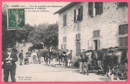 Signes - Tirs De Combat De L'Infanterie Coloniale à Chibron - Pansage Des Chevaux D'Officiers - Militaire - Edit. IMBERT - Signes