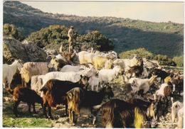 20 - Corse - A BELLEZA DI A CORSICA / Retour Aux Bergeries, à La Tombée Du Jour - 1984 - Chèvres - France