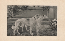 Russian Borzoi Greyhound Dog Vintage Postcard TSN Theo Stroefer Nurnberg - Hunde