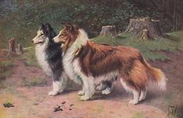 Scottish Shepherd Collie Dog Postcard Cca.1910 - Hunde