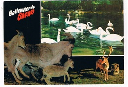 B-7467   ZILLEBEKE : Safari Bellewaarde ( Zoo, Dierentuin ) - Ieper