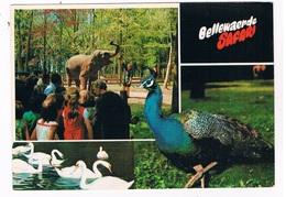 B-7469   ZILLEBEKE : Safari Bellewaarde ( Zoo, Dierentuin ) - Ieper
